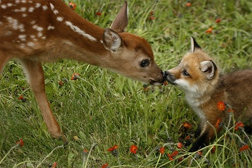 deer-and-fox.jpg