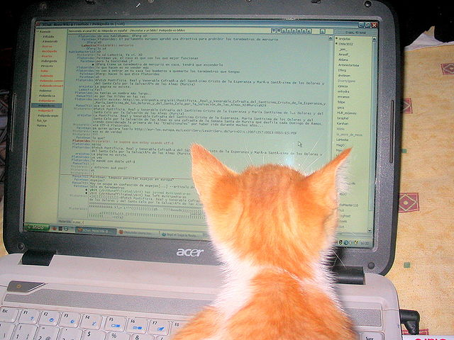 Gato_leyendo_canal_IRC_de_Wikipedia_en_espa%C3%B1ol.jpg