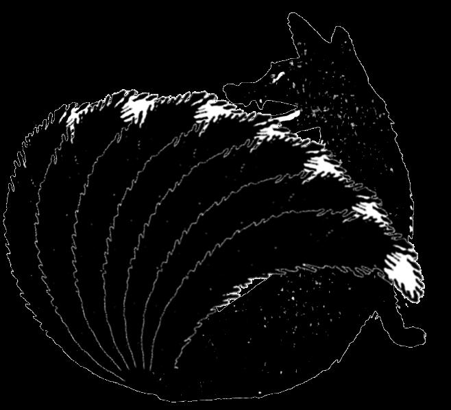 fox7.png