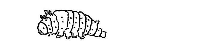 scp-097-ko-larva-2.jpg