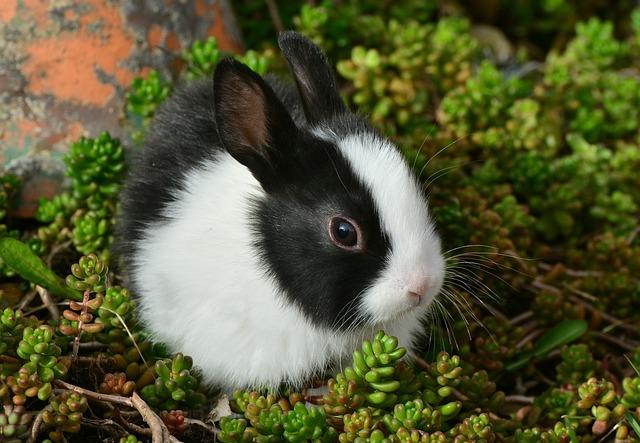 hare-2135472_640.jpg