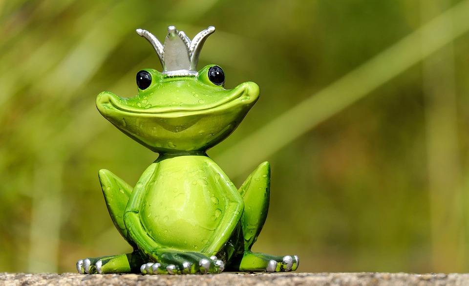 frog-2240764_960_720.jpg