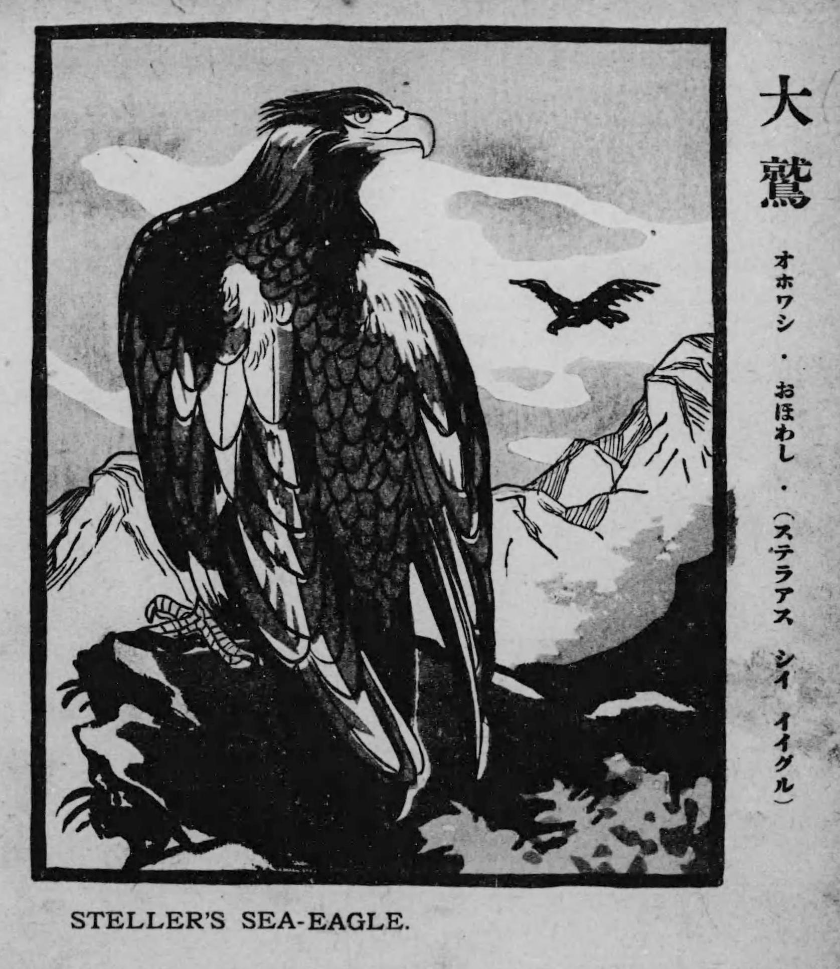 Steller's_sea_eagle.png